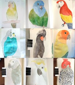 366 Day Parrot Challenge