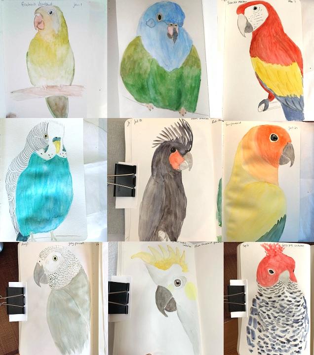366 Parrot Challenge